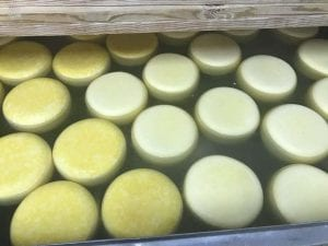 Turning Gouda cheese in the brine bath after 18 hours
